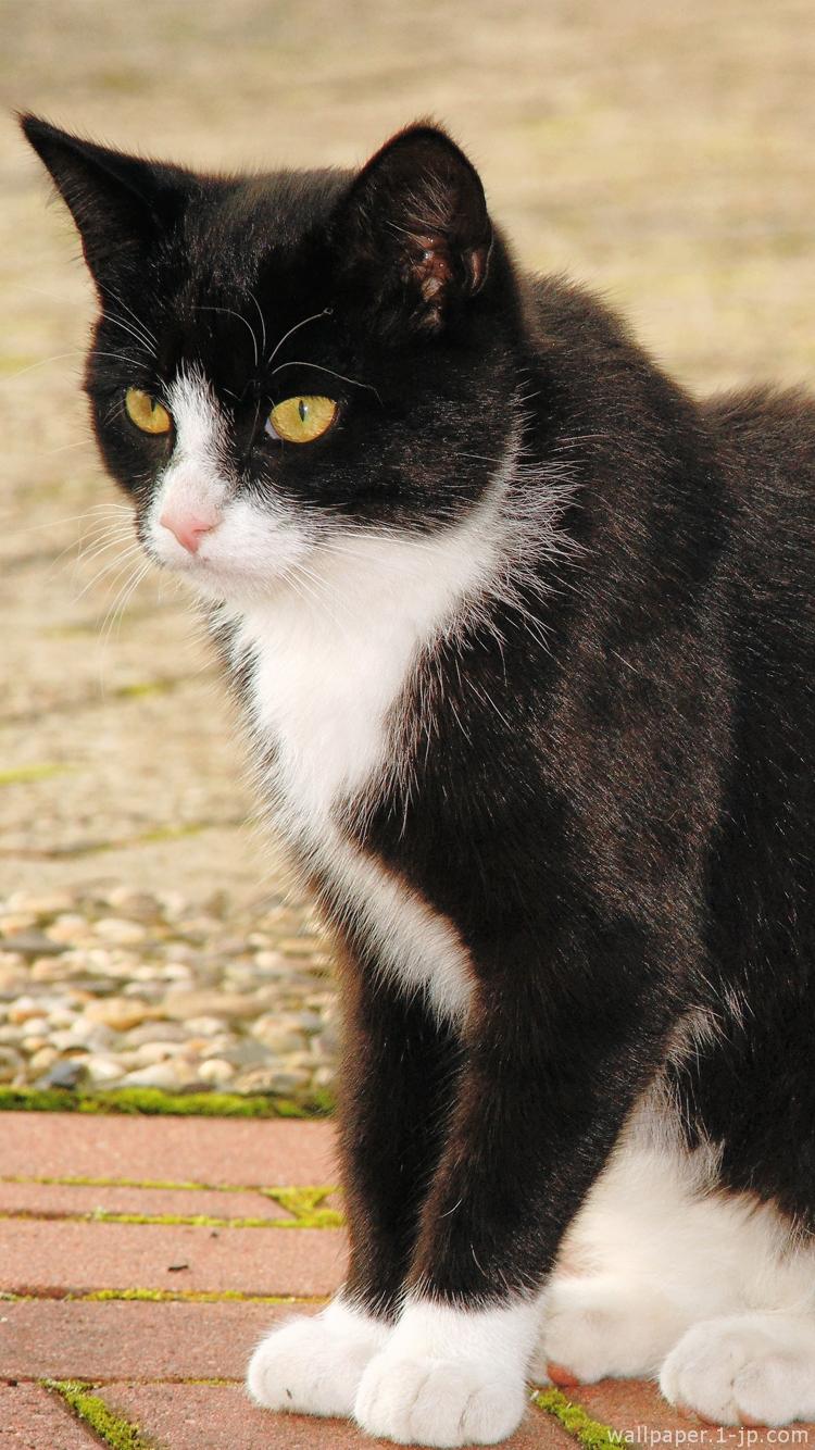 可愛い子猫 白黒ネコ待ち受け スマホ壁紙