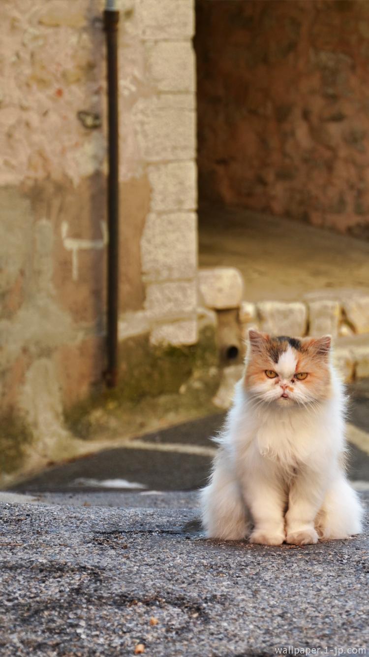 画像 めっちゃ可愛い猫のスマホ用壁紙まとめ 随時更新 Naver まとめ