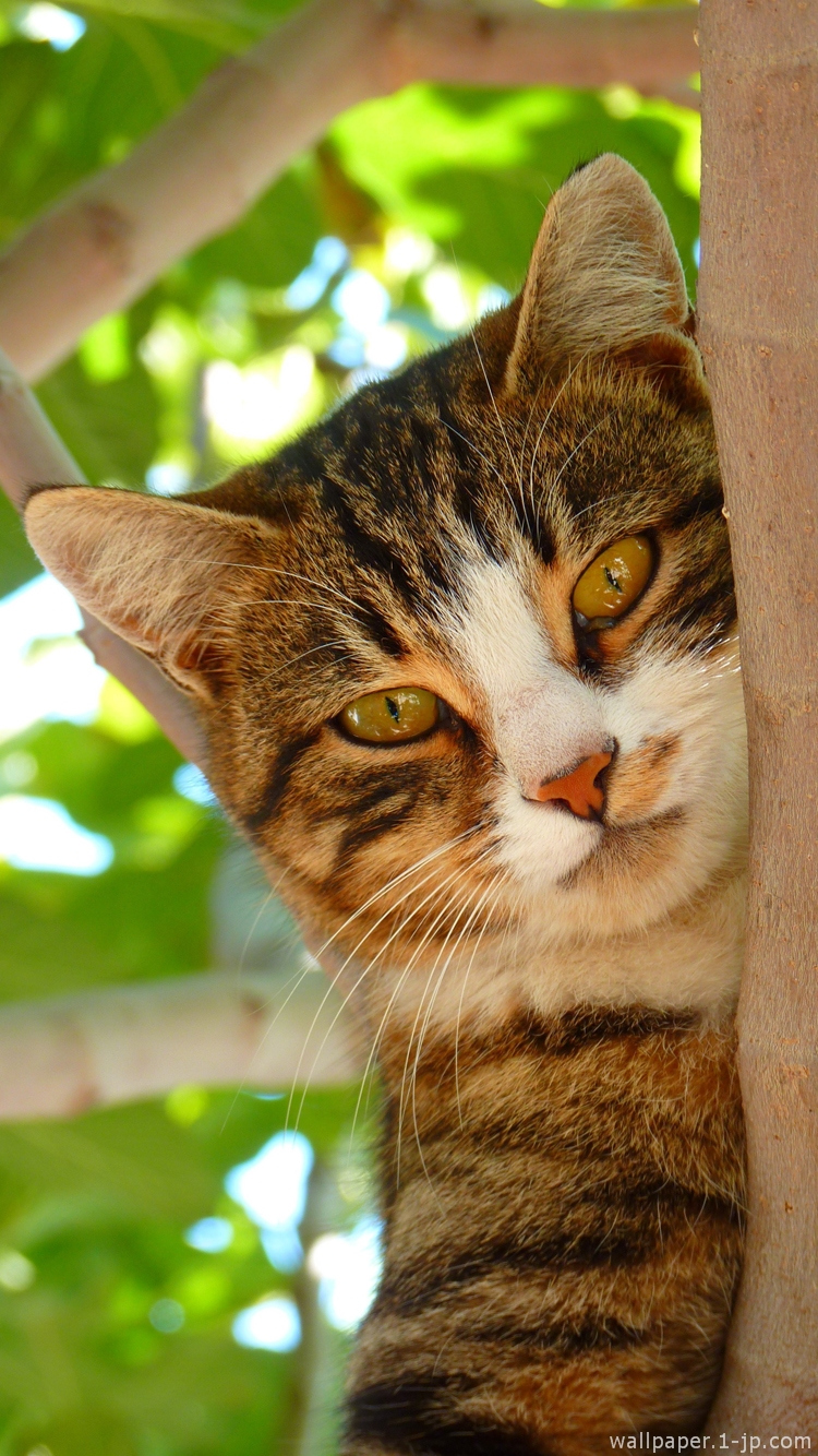 ネコ目線待ち受け & 可愛い猫写真壁紙