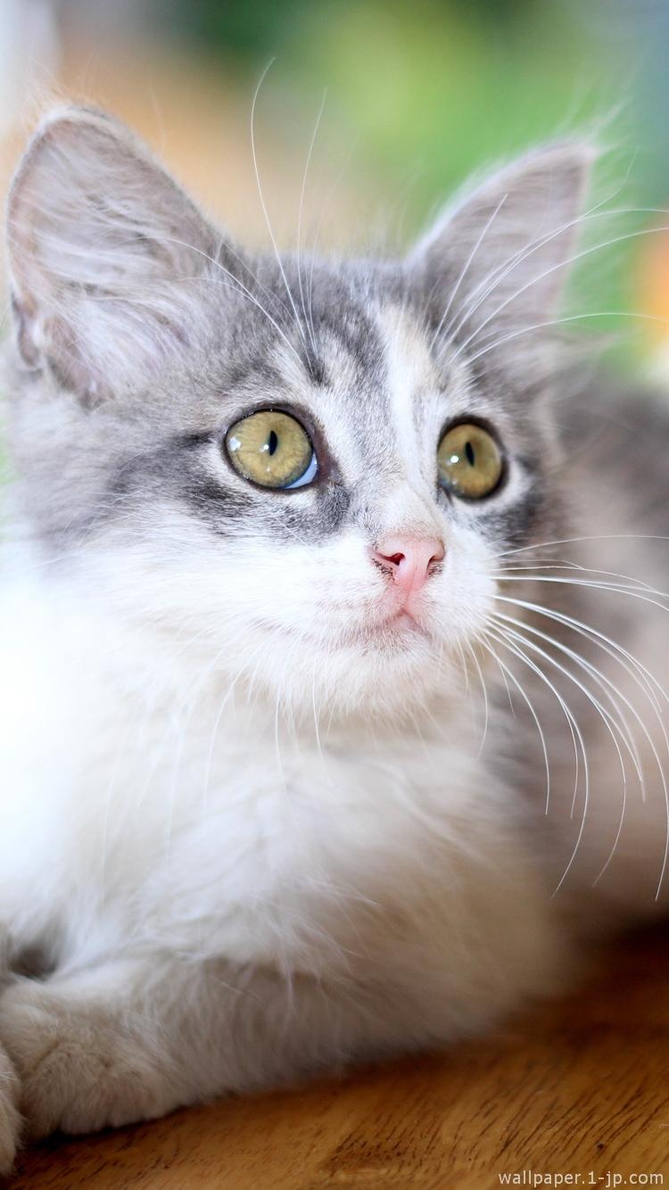 かわいい猫 & かっこいいネコ待ち受け | スマホ壁紙