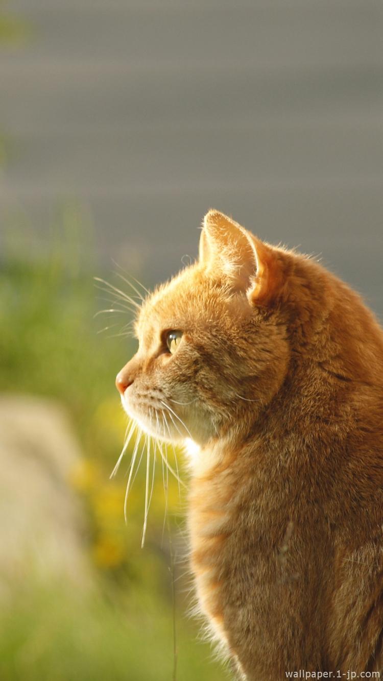 かわいい猫 かっこいいネコ待ち受け スマホ壁紙